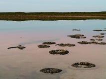 Stromatolites antiguo, Australia occidental Foto de archivo