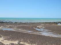 Stromatolites, baía do tubarão, Austrália Ocidental Imagens de Stock Royalty Free
