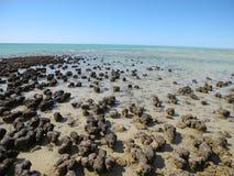 Stromatolites, baía do tubarão, Austrália Ocidental Fotografia de Stock