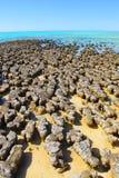 Stromatolites, bahía del tiburón, Australia occidental Imágenes de archivo libres de regalías