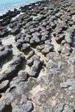 Stromatolites, bahía del tiburón, Australia occidental Imagenes de archivo