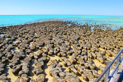 Stromatolites, bahía del tiburón, Australia occidental Imagen de archivo
