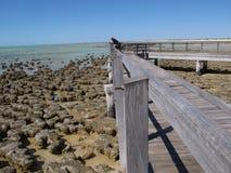 Stromatolites, bahía del tiburón, Australia occidental Foto de archivo
