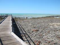 Stromatolites, baia dello squalo, Australia occidentale Immagini Stock