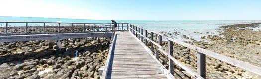 Stromatolites, baia dello squalo, Australia occidentale Fotografia Stock