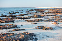 Stromatolites black rocks beach in Shark Bay Royalty Free Stock Images