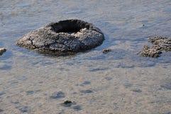 Stromatolites Closeup: Lake Thetis,Western Australia royalty free stock image