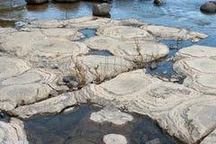 Stromatolites fossilisé Photos libres de droits