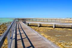 Stromatolites, Haaibaai, Westelijk Australië Stock Foto's