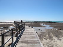 Stromatolites, Haaibaai, Westelijk Australië Royalty-vrije Stock Afbeelding