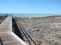 Stromatolites, Haifisch-Bucht, West-Australien stockbilder