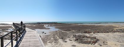 Stromatolites, Haifisch-Bucht, West-Australien Lizenzfreies Stockbild