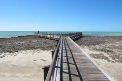 Stromatolites hajfjärd, västra Australien Arkivbilder