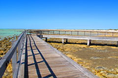 Stromatolites hajfjärd, västra Australien Arkivfoton