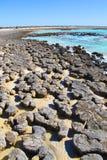 Stromatolites hajfjärd, västra Australien Fotografering för Bildbyråer