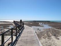Stromatolites hajfjärd, västra Australien Royaltyfri Bild