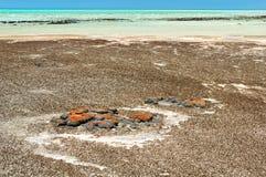 Stromatolites an Hamelin-Pool - Denham lizenzfreie stockfotografie