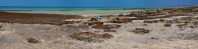 Stromatolites in Hamlin Pool Stock Images