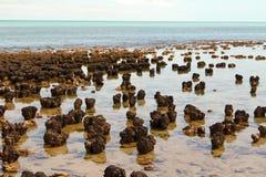 Stromatolites i västra Australien Arkivbilder