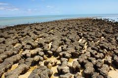 Stromatolites i västra Australien Royaltyfri Foto