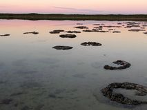 Natural Stromatolites stock photo