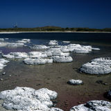 Stromatolites Royalty Free Stock Photos