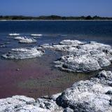 Stromatolites Royalty Free Stock Images