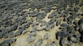Stromatolites-Nahaufnahmehintergrund stock video footage