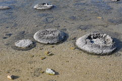 Stromatolites, Oldest Living Fossils: Lake Thetis,Western Australia Stock Photos