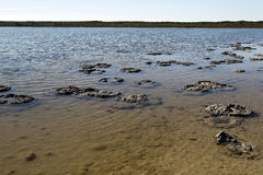 Stromatolites Stock Photos