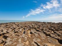 Stromatolites op het gebied van Haaibaai, Westelijk Australië austraal-azië stock afbeeldingen