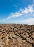 Stromatolites op het gebied van Haaibaai, Westelijk Australië austraal-azië royalty-vrije stock foto
