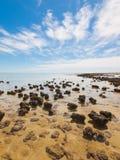Stromatolites op het gebied van Haaibaai, Westelijk Australië austraal-azië royalty-vrije stock afbeelding