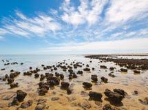 Stromatolites op het gebied van Haaibaai, Westelijk Australië austraal-azië royalty-vrije stock afbeeldingen