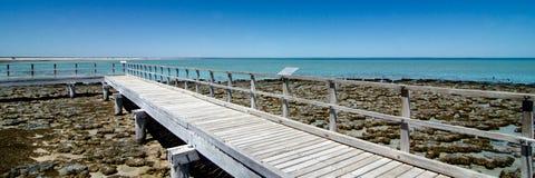 Stromatolites på hajfjärden västra Australien Arkivbilder