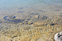 Stromatolites Underwater at Lake Thetis Stock Photos