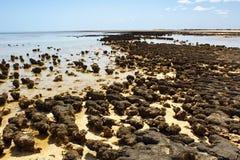 Stromatolites in West-Australië royalty-vrije stock foto