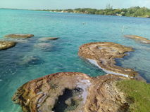 Stromatolitos Fotos de Stock