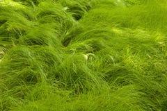 Stromend Gras bij het Hiaat van de Beeldhouwer Royalty-vrije Stock Foto's
