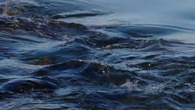 Stromend Water bij de waterval, het van een lus voorzien stock video