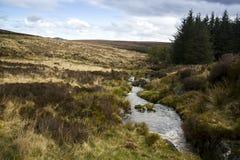 Stromend water binnen het Park van Wicklow, Ierland stock afbeelding