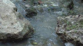 Stromend water in een kleine stroom 2 SF stock videobeelden