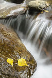 Stromend water tussen rotsen met de herfstbladeren Stock Afbeeldingen