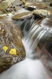 Stromend water tussen rotsen met de herfstbladeren Royalty-vrije Stock Afbeeldingen