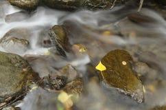 Stromend water tussen rotsen met de herfstbladeren Stock Foto's