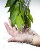 Stromend zoet water Stock Fotografie