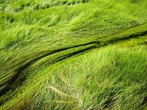 Stromende grassen Royalty-vrije Stock Afbeeldingen