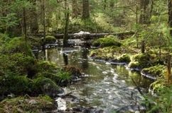 Stromende kreek in een bemost bos stock foto's