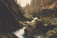 Stromflusswald und moosiges auf Felsen in Slowenien Stockfoto
