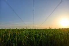 Stromleitung auf dem Gebiet lizenzfreie stockfotos